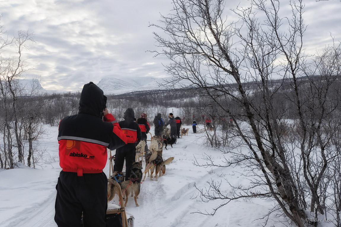 dog-sledding-sweden-4