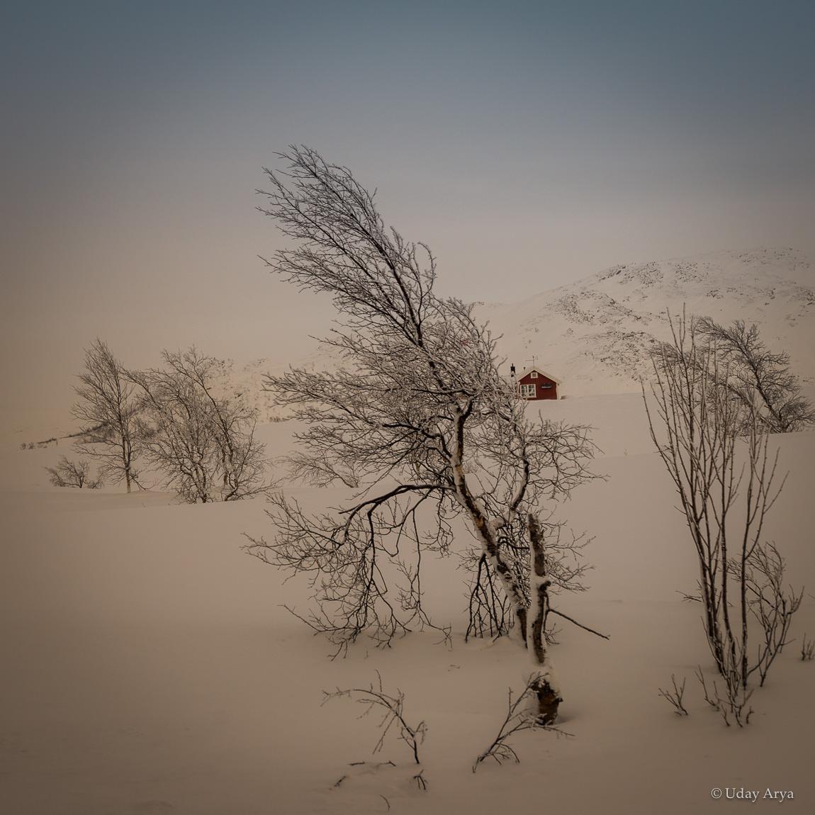 lonely-tree-arctic